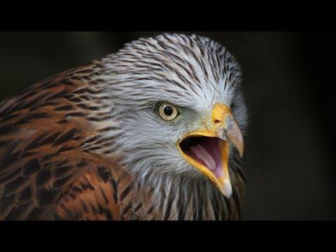 أخطر-10-طيور-فى-العالم-,-أهرب-فور-رؤيتها----!!