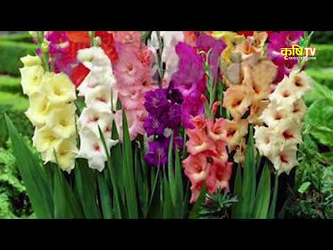 Puspanjali - Protection From Pests on Gladiolus Flower