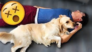 Download Youtube: Playing Dead with CHICA!!