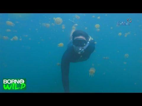 Born to be Wild: Jellyfish party in Bucas Grande, Surigao