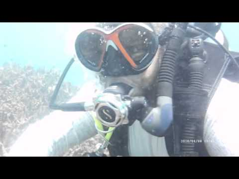 Lots little fish! Scuba diving Trincomalee Sri Lanka Taprobane Divers