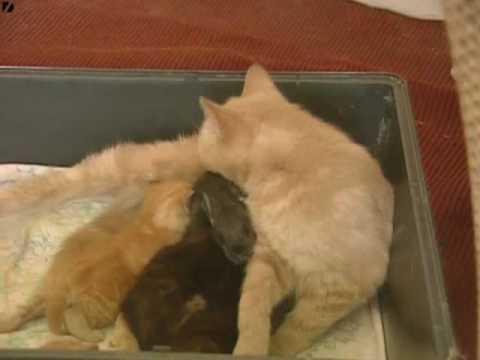 una gatta fa da mamma ad un coniglietto!