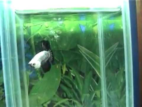 A Tour Of My Fishroom…