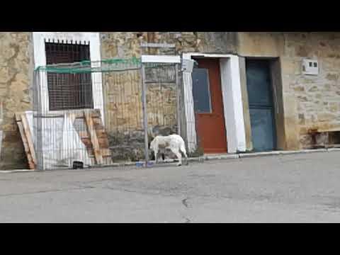 Rescate en regumiel de la Sierra (Burgos) 4/11/2017