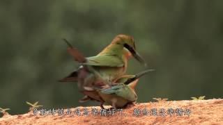 金門國家公園夏日追風中文版