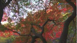 Donghae-si South Korea  city photo : Mureung Valley's Fall Foliage at it's best, Gangwon-do, Korea