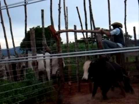 Pedro Henrique - Peão 1000baladas - Santa Tereza de Goiás - GO