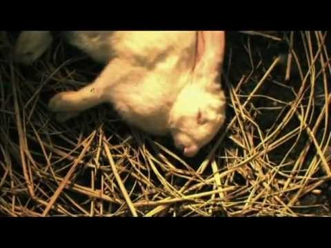 Rabbit Horror 3D / Tormented (2011) HD