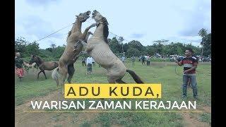 Video Adu Kuda, Warisan Zaman Kerajaan | Ekspedisi Pulau Muna (5) MP3, 3GP, MP4, WEBM, AVI, FLV Januari 2019