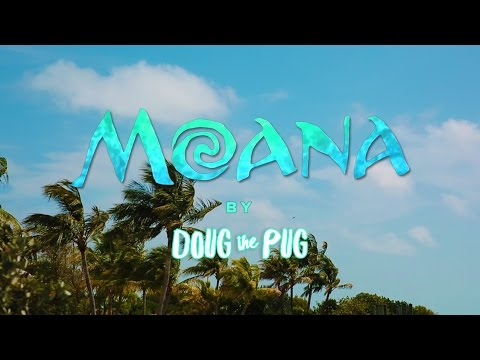 Disney s Moana  Pug Edition