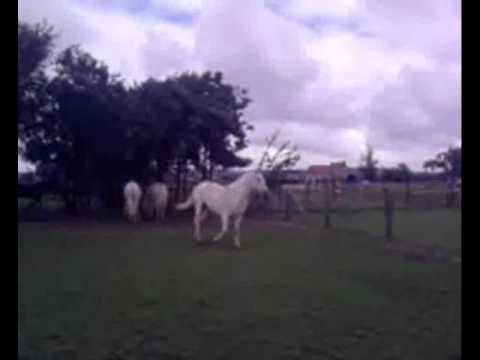 Video my Horse, me, my friends, and my friends horses xxx download in MP3, 3GP, MP4, WEBM, AVI, FLV January 2017
