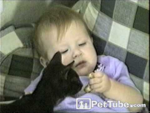 pettube - A cat steals food from an unsuspecting baby. http://pettube.com.