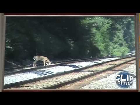 Video Deer Gets Hit by Train download in MP3, 3GP, MP4, WEBM, AVI, FLV January 2017