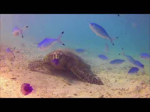 Turtle having dinner
