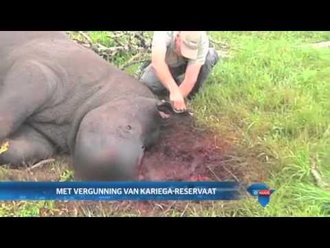 Thandi word ma / Thandi becomes a mother