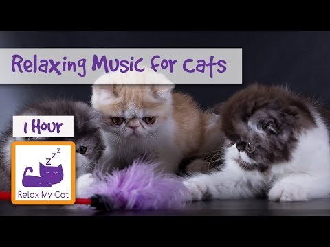 1 hour of relaxing music for cats – cat music – relax my cat