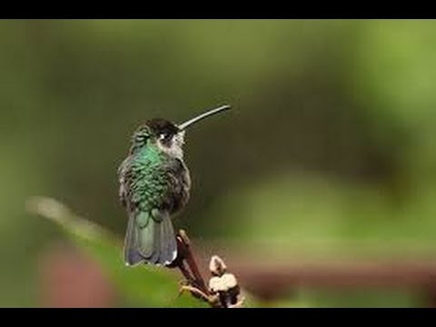 Costa Rica fascinating nature part 2. – Costa Rica faszinierende Natur 2. Teil