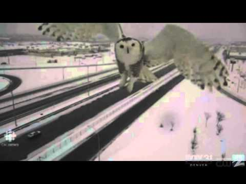 Traffic Cam Snow Owl!