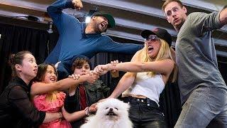 Video Whose Dog Is It? | Lele Pons MP3, 3GP, MP4, WEBM, AVI, FLV April 2018