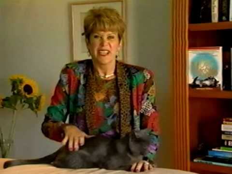 Cat Massage Instructional Video