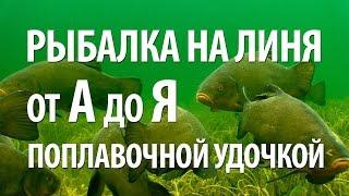 Поплавочная ловля линя - Видео