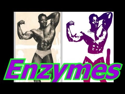 Enzymes – Bodybuilding Tips To Get Big