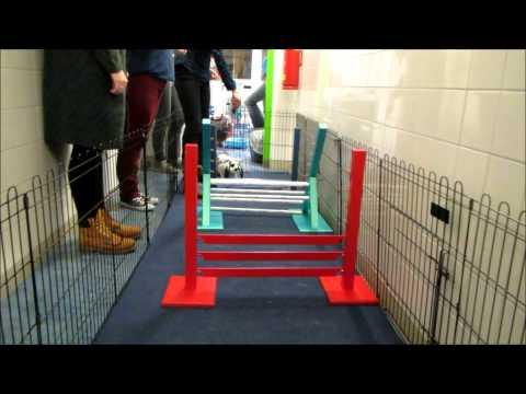 Konijnen training van konijnenschool Joy