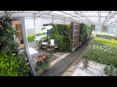 IFNH Living Wall Installation Video Screenshot