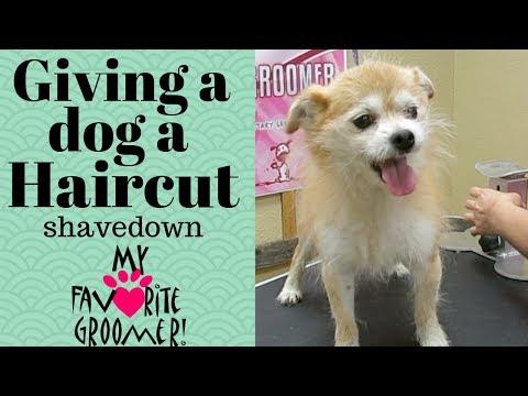Giving a dog a Haircut