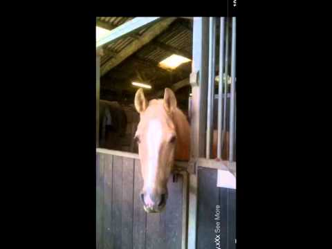 Video My Horse Billy. R.I.P I Will Miss You Forever xXx download in MP3, 3GP, MP4, WEBM, AVI, FLV January 2017