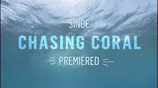Nonton Celebrating One Year with Chasing Coral Film Subtitle Indonesia Streaming Movie Download