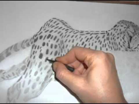 Gepárd rajzolás videó