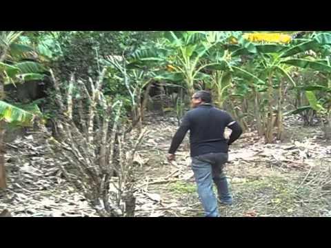 Seu Pereira no sitio em Bananeiras - PB.diariodobrejo.com