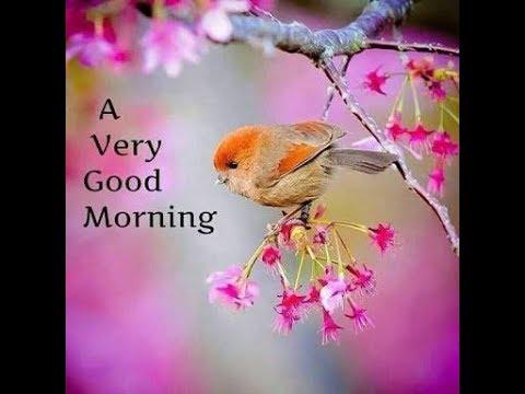 Video Good morning whatsapp status video, goodmorning video song, good morning greetings download in MP3, 3GP, MP4, WEBM, AVI, FLV January 2017