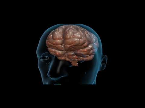 The effects of drugs in the brain