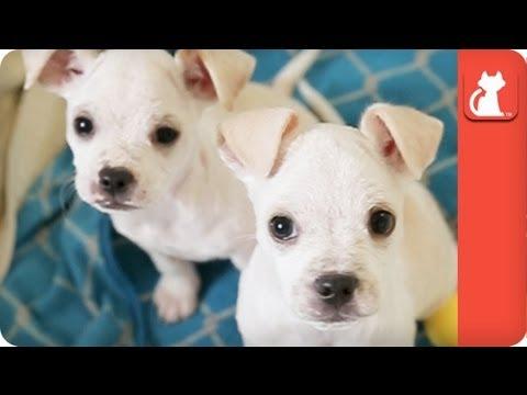 los-angeles-cuccioli-abbandonati-con-uninfezione-della-pelle-trovano-casa