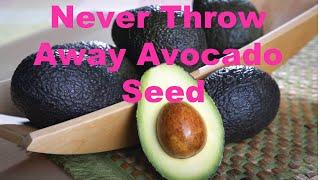 Video Never Throw Away Avocado Seed | Anti Aging  Antioxidants Packed MP3, 3GP, MP4, WEBM, AVI, FLV Agustus 2019