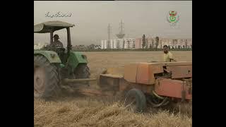 الجزائر العاصمة / وفرة وجودة في محصول الحبوب بالمستثمرات الفلاحية
