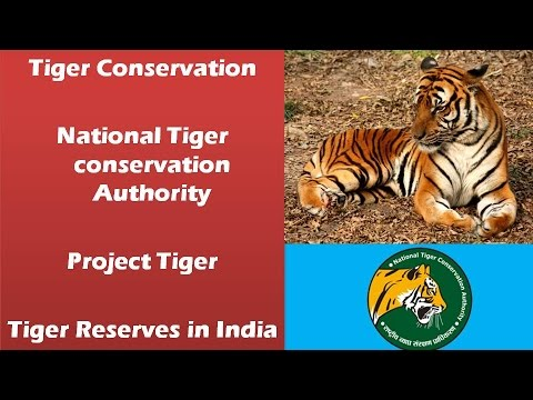 project tigers