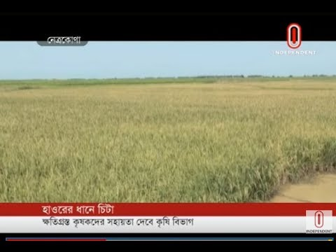 Haor farmers crying (24-04-2019) Courtesy: Independent TV