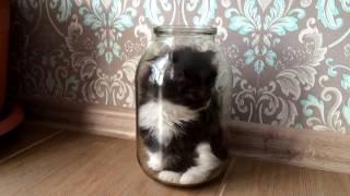 Что произойдет с котенком?/What happens with a kitten?
