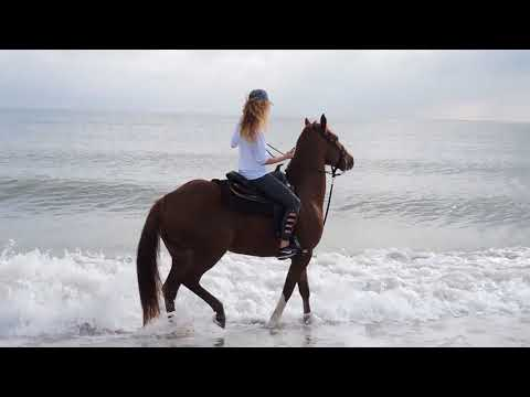 Horesback Riding on a Florida Beach | PLAY HARD FLORIDA