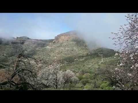 Time Lapse Almendros y alisio en Gran Canaria