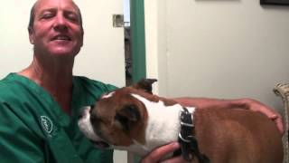 Boxers and Tumors