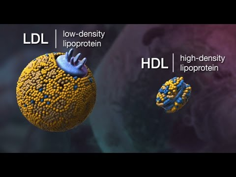 Plasma Lipoproteins: Arabic tutorial: (1/2)