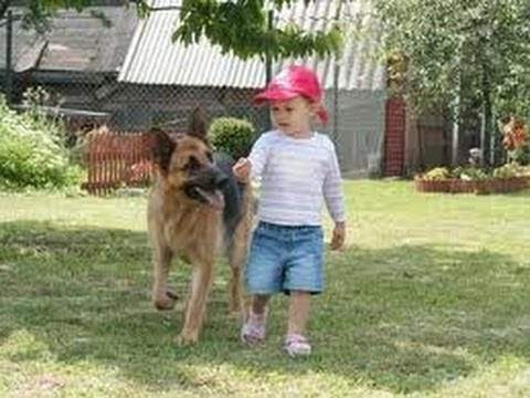 BABY - Funny Babies with Funny Dog German Shepherd Videos. Funny baby videos and funny dogs. Funny Pranks Funniest Videos.