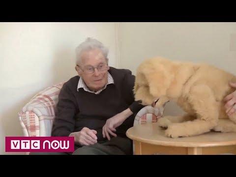 Chó robot mang niềm vui đến cho người già ở Anh | VTC1 - Thời lượng: 65 giây.