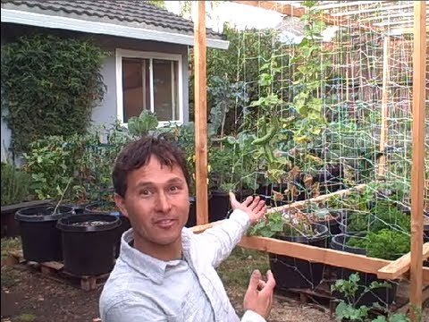 VEGETABLES - John from http://www.growingyourgreens.com/ goes on a field trip to a viewers home to share with you their backyard container garden. In this episode you wil...