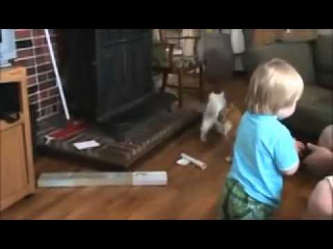 TOP 5 CAT VIDEOS mp4 Top funny fail,best funny movies