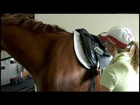 How to Fit a Dressage Saddle